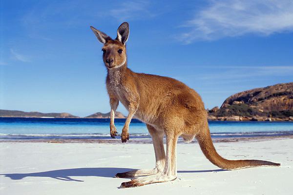 australien003_03