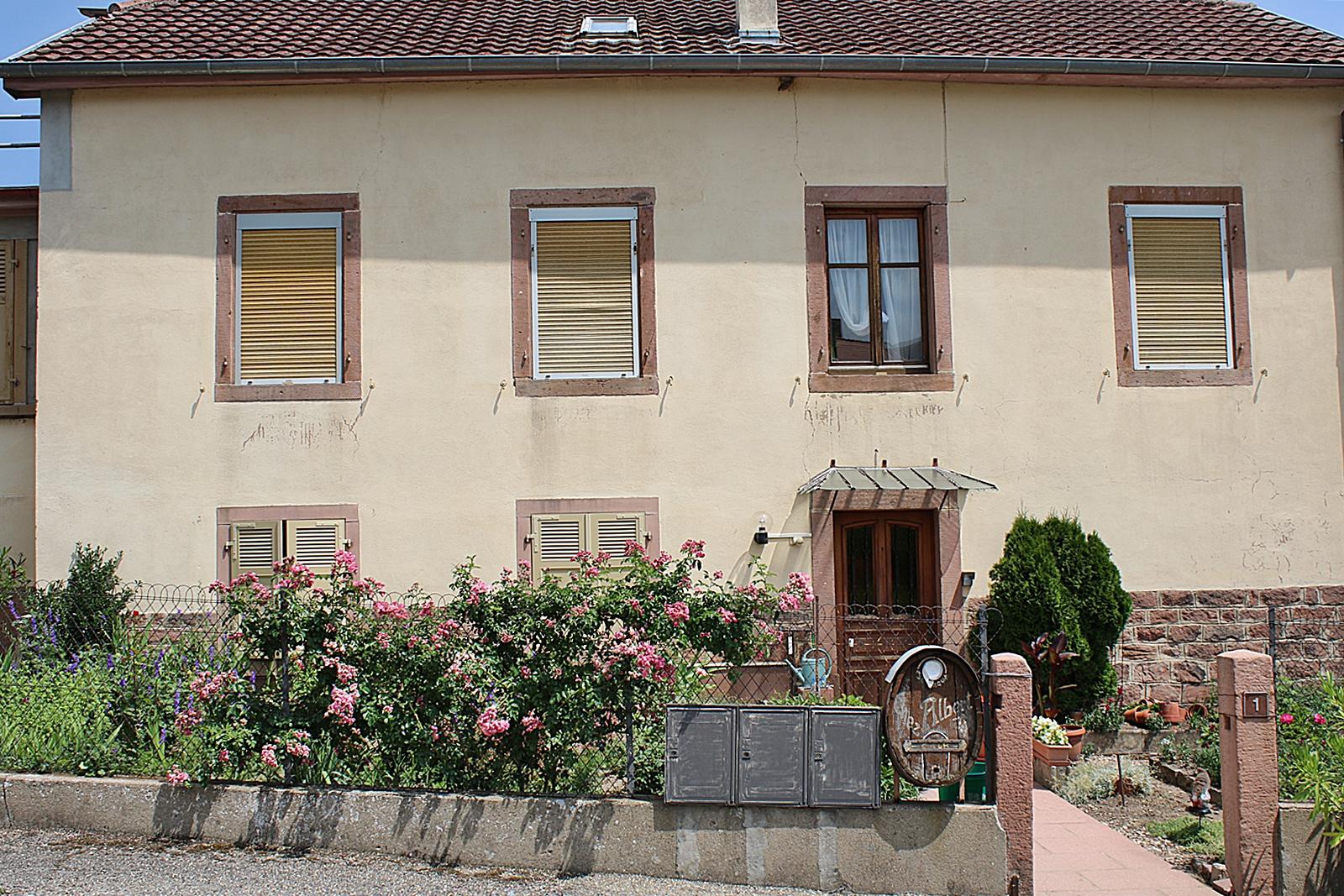 Besöker vingårdar i vackra Alsace i Frankrike