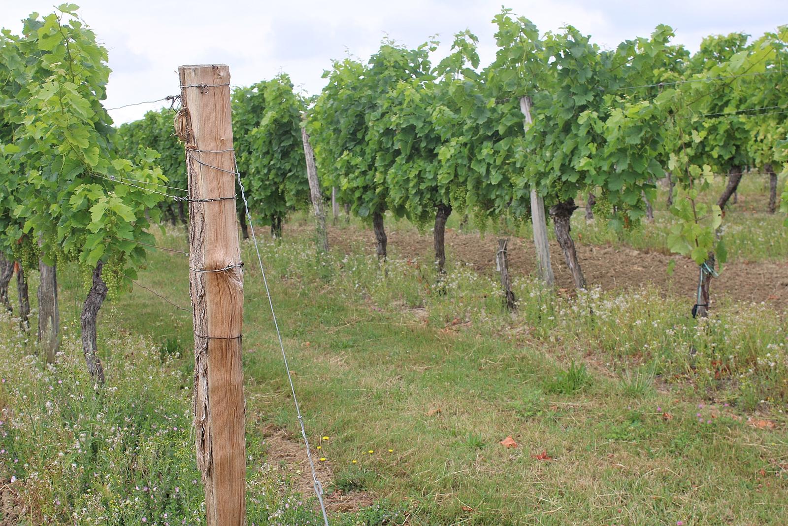 Välkomna till Bordeaux i Frankrike, nu testar vi röda viner